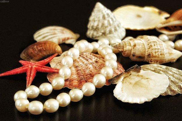 Setkání účastníků čtenářské soutěže Lovci perel - pololetní vyhlášení výsledků