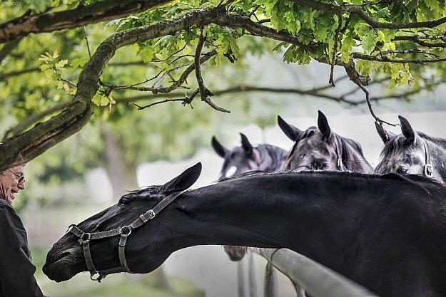 Besedy o koních s odborníky - Dámy od koní