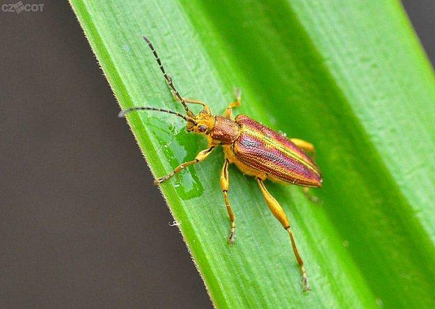 Procházka s entomologem a arachnologem