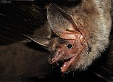 Procházka za netopýry