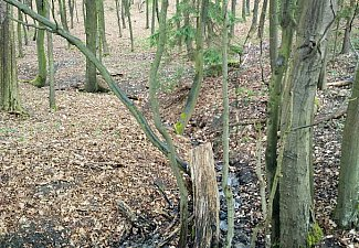 Hluboký potok - pramen