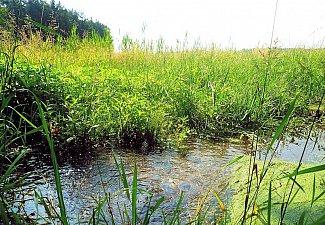 Kozašický potok - pramen