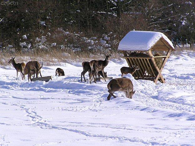 Vysoké Chvojno - Small zoo