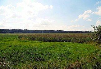Senický potok - pramen