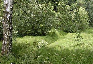 Na Hradech - přírodní rezervace