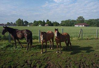 Ranch Buena Vista