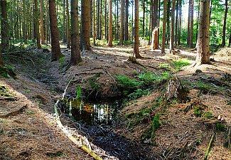 Krasnický potok - pramen
